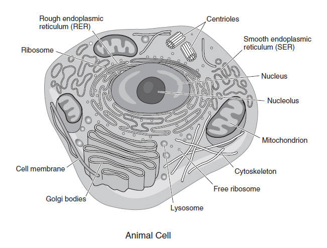 Asvab cell and species reproduction species of plants and animals cannot continue without reproduction all cells have hereditary material that is passed on to malvernweather Image collections